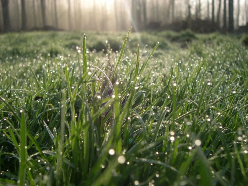 Dew glistening on grass - Spring 2008