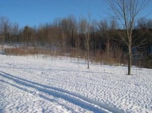 Snow on the land