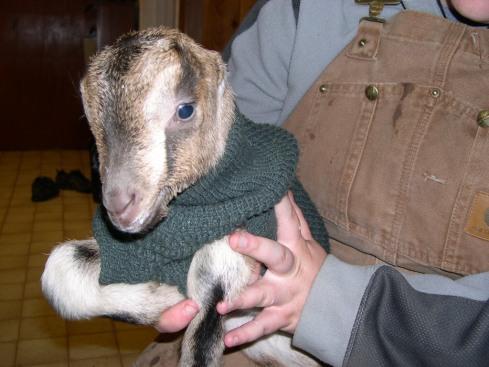 Johann 1 day old